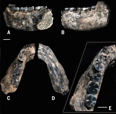 O fóssil encontrado visto de vários ângulos
