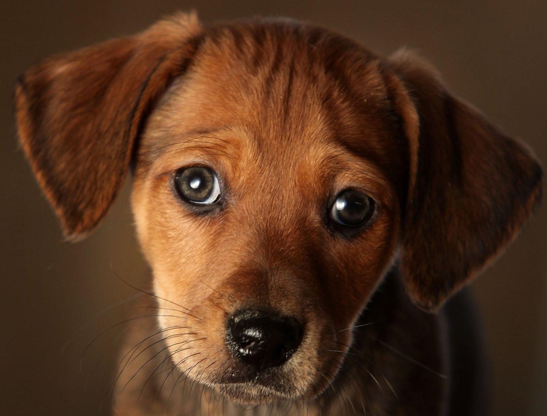 Animal|dog|Human, Interest|pet|topics|topix|bestof|toppics|toppix,
