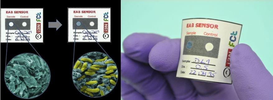 bacterias02