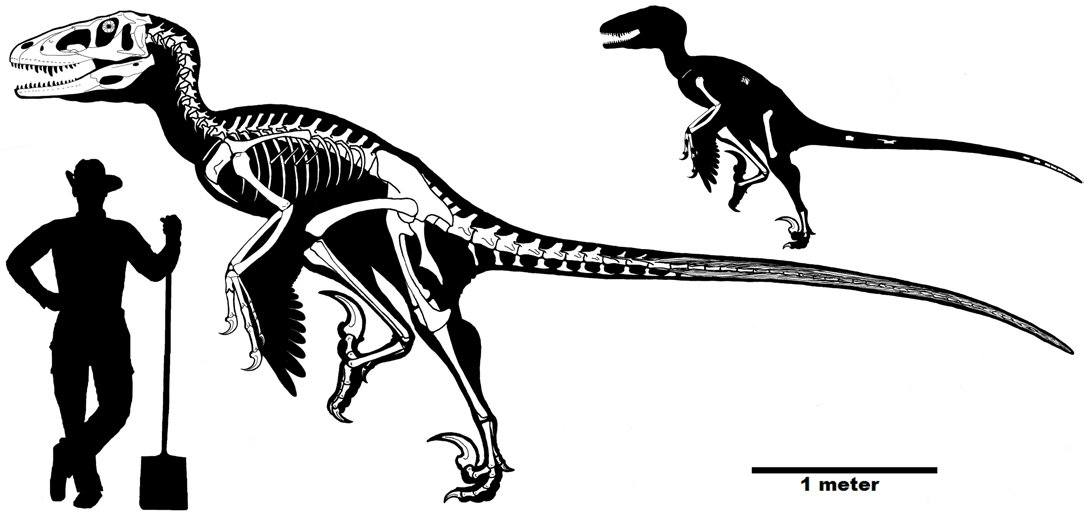 Size-reconstruction