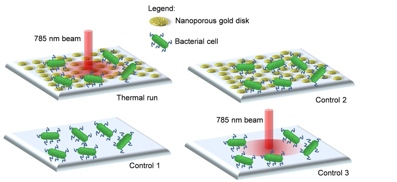 Santos et al 2016 OME_bacterias nanoparticulas de ouro_2