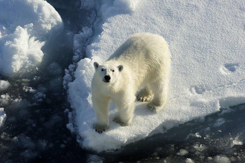 Alterações climáticas: Portugueses estudam efeitos do aumento da temperatura do Árctico em microrganismos.