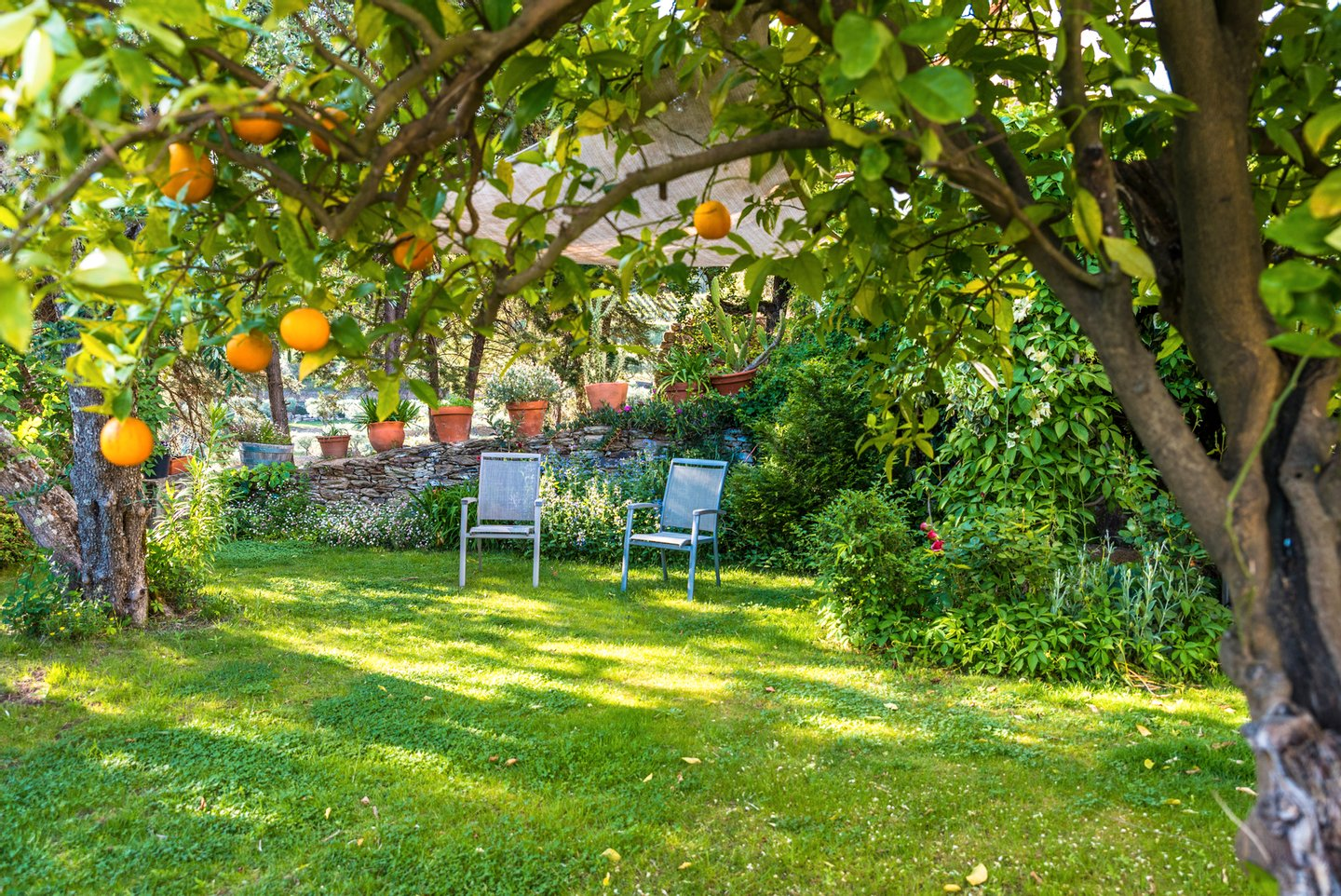 Beautiful, Ornamental Garden, Serene People, Single Flower, Residential Building, Leisure Activity, No People, Environmental Conservation, Seat, Comfortable, Beauty In Nature, Vegetable Garden, Grass, Gardening, Flowerbed, Beauty, Idyllic, Relaxation, Tranquil Scene, Orange Color, Green Color, Wood - Material, Pattern, Nature, Lifestyles, Outdoors, Recreational Pursuit, Orange - Fruit, Tree, Flower, Day, Summer, Springtime, Terraced Field, Balcony, Patio, House, Home Interior, Formal Garden, Design, Decor, Table, Chair, Furniture, friuts,