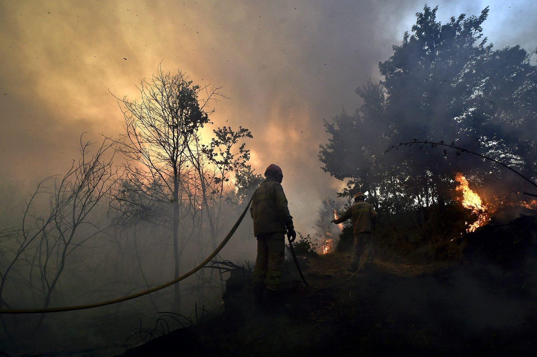 Portugal: Incêndio em Vila Nova, Viseu