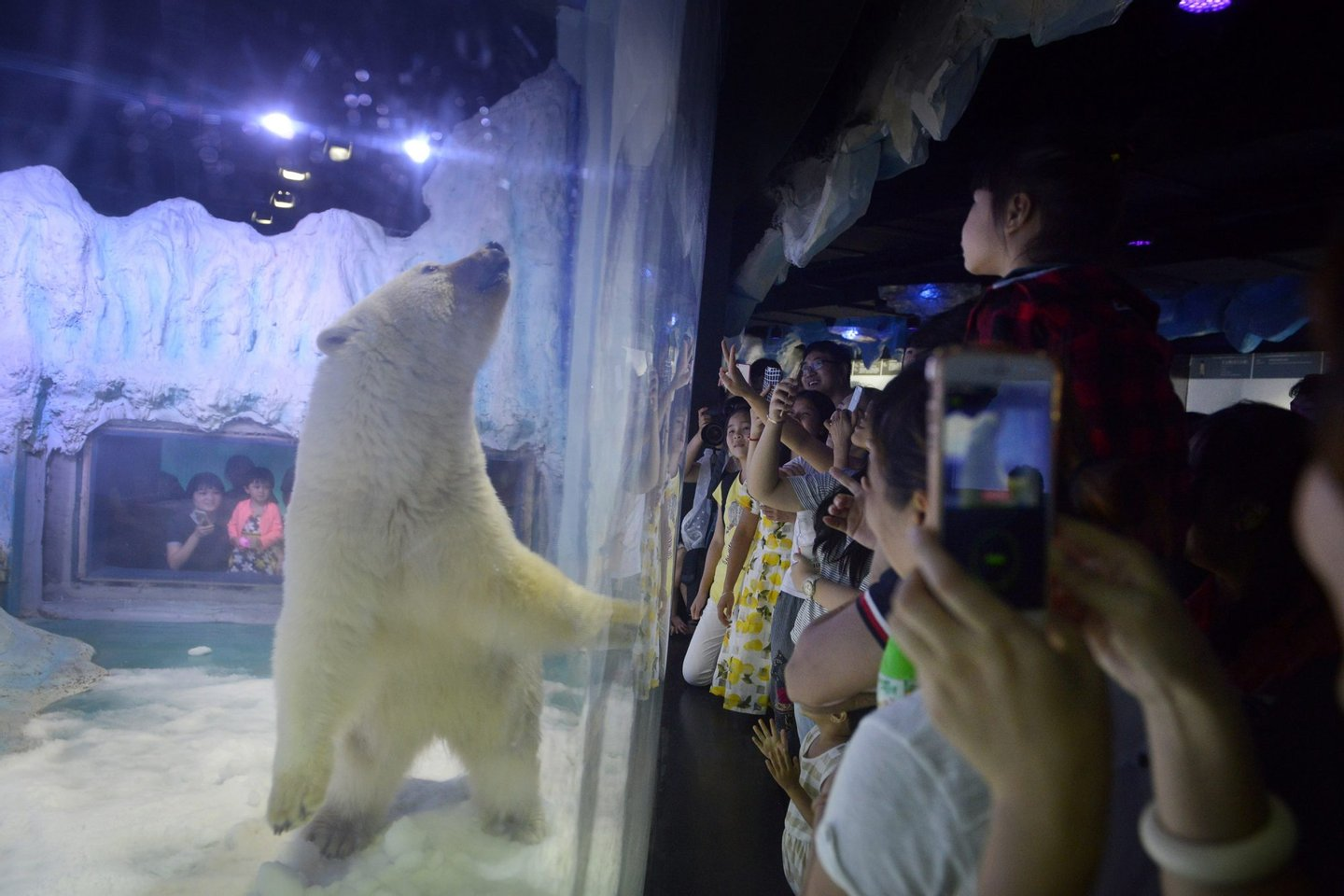 """TOPSHOT - This picture taken on July 24, 2016 shows visitors taking photos of a polar bear inside its enclosure at the Grandview Mall Aquarium in the southern Chinese city of Guangzhou. A Chinese aquarium holding a forlorn-looking polar bear named Pizza said on September 20 it has """"no need"""" for foreign interference, after activists offered to move the animal to a British zoo. / AFP / - (Photo credit should read -/AFP/Getty Images)"""